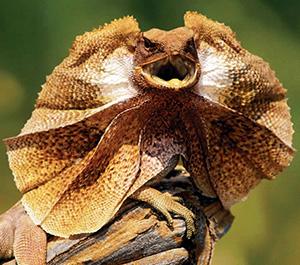 reptile behavior (1)